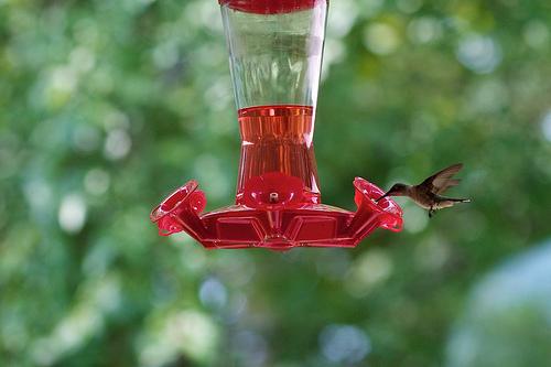 Hummingbird 65
