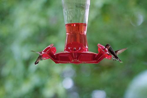 Hummingbird 92